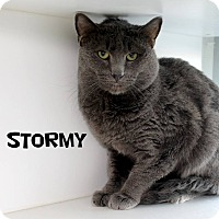 Adopt A Pet :: Stormy - Edgewood, NM