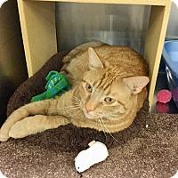 Adopt A Pet :: Otis Redding - Colmar, PA