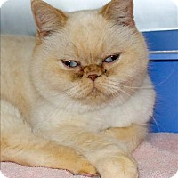 Adopt A Pet :: Serena - San Luis Obispo, CA