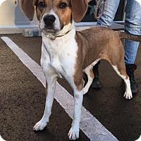 Adopt A Pet :: Randall - Cashiers, NC
