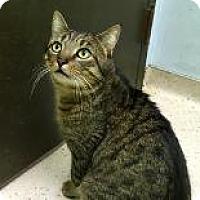 Adopt A Pet :: Dio Brando - Janesville, WI