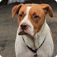 Adopt A Pet :: Roxie - Flushing, MI