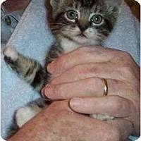 Adopt A Pet :: Socky - Reston, VA
