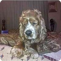 Adopt A Pet :: Buddy - Tacoma, WA