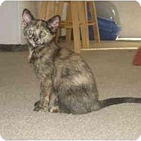 Adopt A Pet :: Genevieve - Davis, CA
