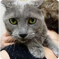Adopt A Pet :: Nadja - Chicago, IL