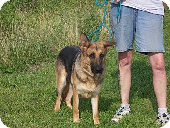 German Shepherd Dog Dog for adoption in Tully, New York - CARRIE