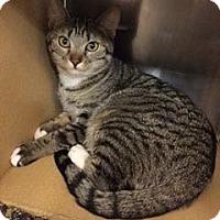 Adopt A Pet :: Penny - Colmar, PA