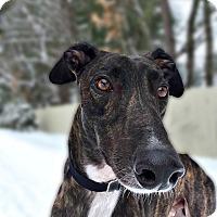 Adopt A Pet :: Elliot - Swanzey, NH
