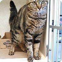Adopt A Pet :: Diamond - Milford, NJ