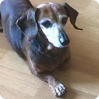 Adopt A Pet :: Sidney - Gainesville, FL
