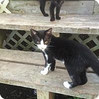 Adopt A Pet :: Freya - Clarkson, KY