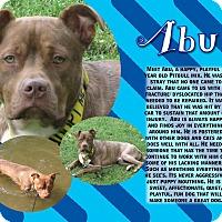 Adopt A Pet :: Abu - Cokato, MN
