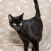 Adopt A Pet :: Vivvy 5411m - Fort Mill, SC