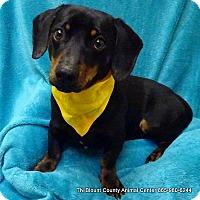 Adopt A Pet :: Prince - Maryville, TN