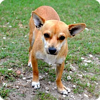Adopt A Pet :: Cody - Clermont, FL