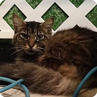 Adopt A Pet :: Bobby - Elyria, OH