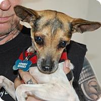 Adopt A Pet :: Sasha - Brooklyn, NY