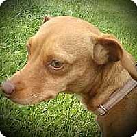 Adopt A Pet :: Felicity - Columbus, OH