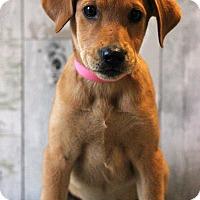 Adopt A Pet :: Renee - Waldorf, MD