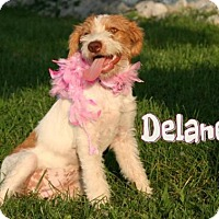 Adopt A Pet :: Delaney  * Adoption Pending * - Marion, KY