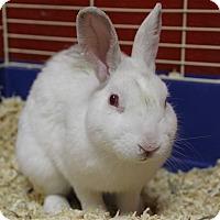 Adopt A Pet :: Dewey - Elyria, OH