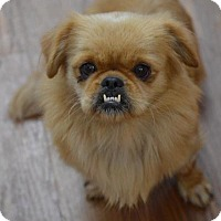 Adopt A Pet :: Suzy - Cokato, MN