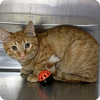 Adopt A Pet :: Phelps $25 Fee in Dec - Ottawa, KS