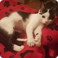 Adopt A Pet :: Bones - South Bend, IN