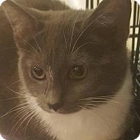 Adopt A Pet :: Chris - Griffin, GA