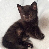 Adopt A Pet :: Hot Fudge - Templeton, MA