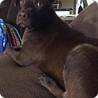 Adopt A Pet :: Bentley - Broken Arrow, OK