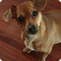 Adopt A Pet :: Sailor - Littleton, CO