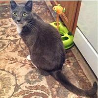 Adopt A Pet :: Greyling [CP] - Oakland, CA