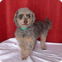 Adopt A Pet :: Tito - Van Nuys, CA