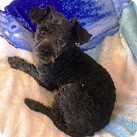 Adopt A Pet :: Rolo - Rancho Cucamonga, CA