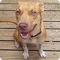Adopt A Pet :: Julie - Greenville, SC