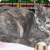 Adopt A Pet :: Kimme - Richmond, VA
