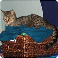 Adopt A Pet :: Joy - Davis, CA