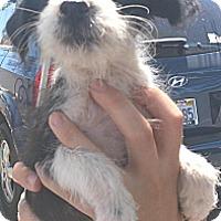 Adopt A Pet :: Francie - Phoenix, AZ