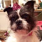 Adopt A Pet :: Dabby