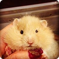 Adopt A Pet :: Sammy - Bensalem, PA