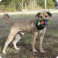 Adopt A Pet :: Halden - Mocksville, NC