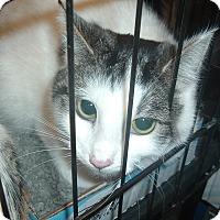 Adopt A Pet :: Cutie Pie - Avon, OH