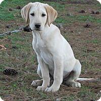 Adopt A Pet :: SUNDANCE - Hartford, CT