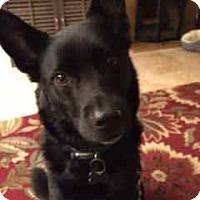 Adopt A Pet :: Ziggy - San Francisco, CA