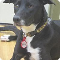 Adopt A Pet :: Ena - Baden, PA