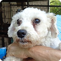 Adopt A Pet :: Snow White - Crump, TN