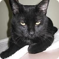 Adopt A Pet :: Lulu - Gary, IN