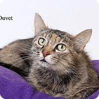 Adopt A Pet :: Duvet - Luling, LA